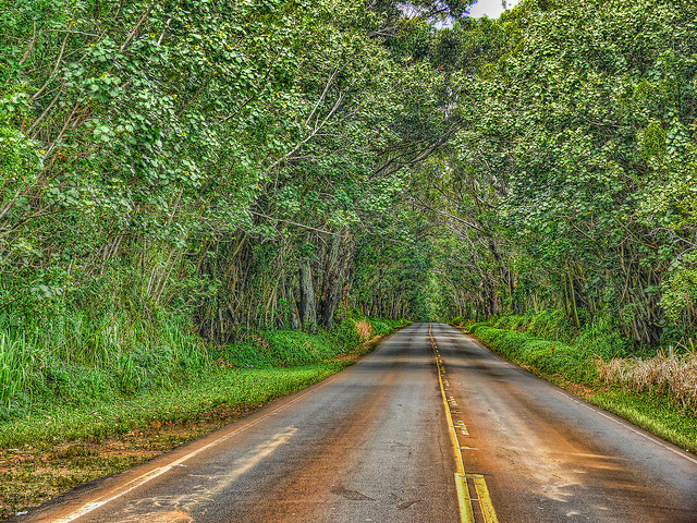 Tree Tunnel North of Koloa Town, Kauai, Hawaii